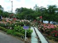 2019-06-23花巻温泉薔薇園186
