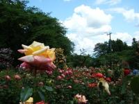 2019-06-23花巻温泉薔薇園187