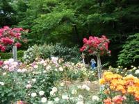 2019-06-23花巻温泉薔薇園192