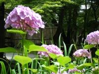 2019-07-06中尊寺ハス祭り170
