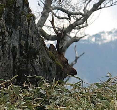 181030鹿