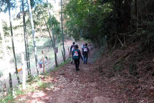 181104竹藪の道