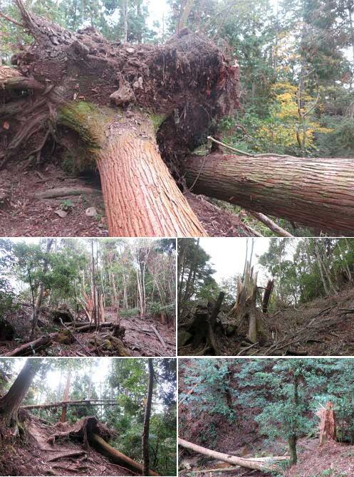 181116倒木