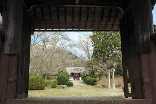 190326世尊寺桜