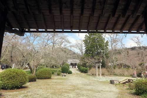 190326世尊寺桜2