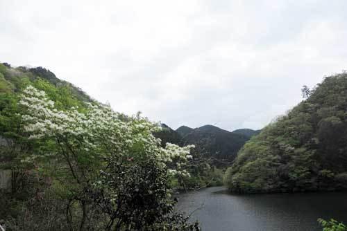 190425白い花2