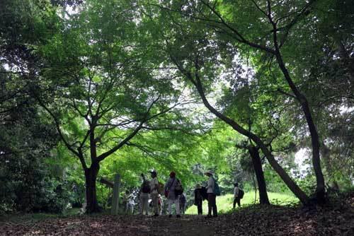 190526定林寺跡2