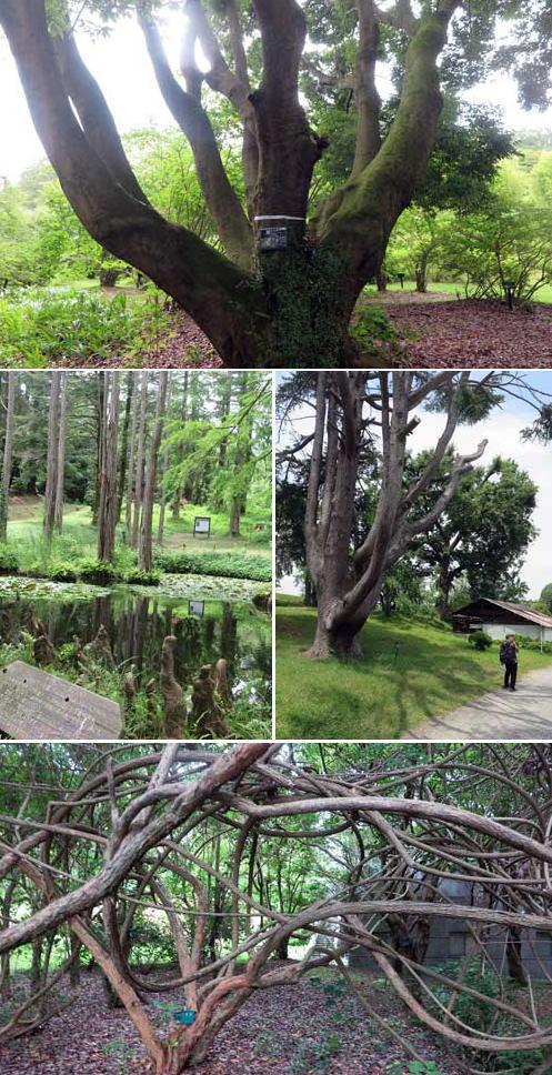 190629植物園樹木