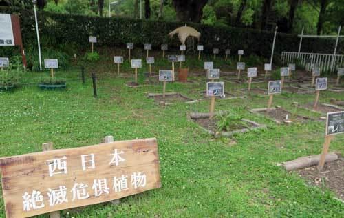 190629西日本絶滅危惧種
