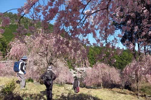 190409花の園3