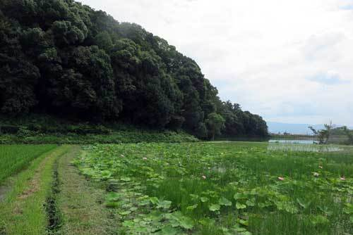 190707箸墓2