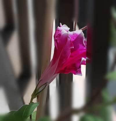 190806開花