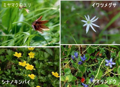 13.8.9高山植物2_1