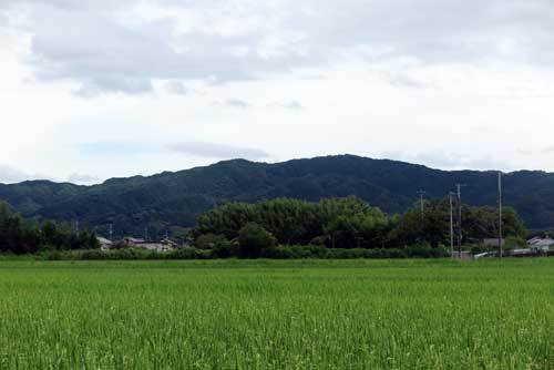 190905田んぼ2