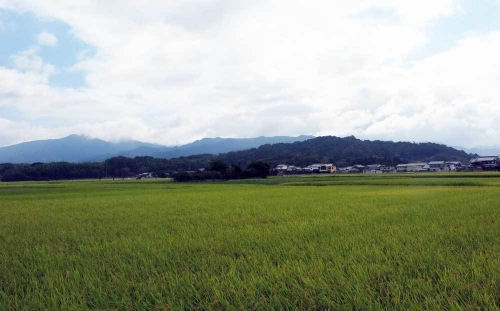 191006稲穂香久山