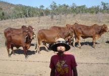 メロンピッキング 牛と遭遇