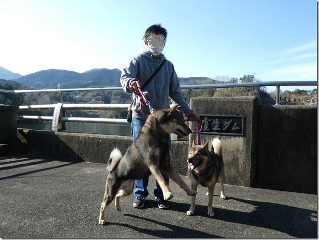 20190310ダム散歩03-15