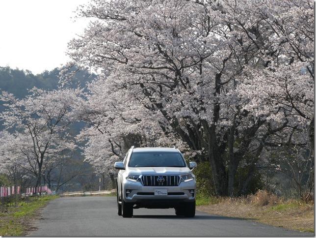 20190407桜散歩01-01