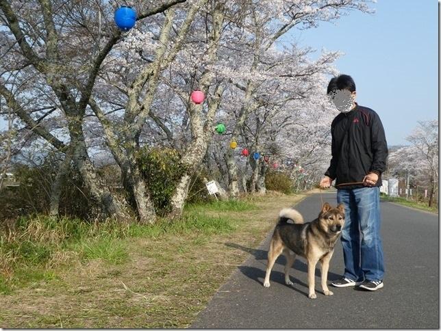 20190407桜散歩01-02