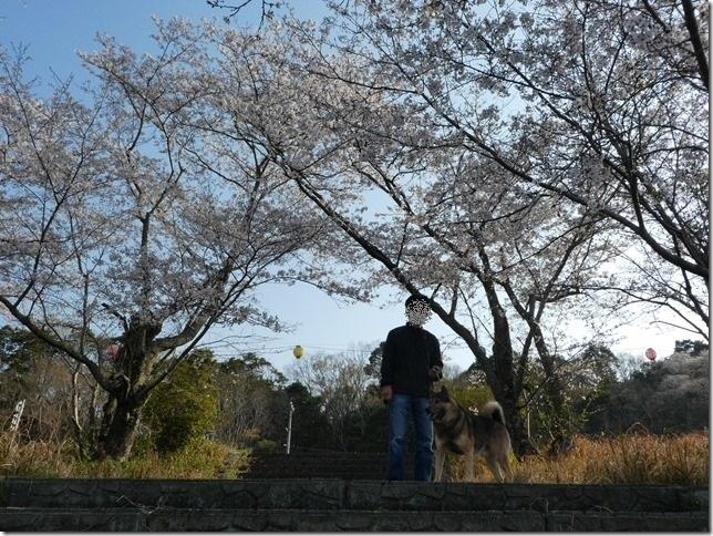 20190407桜散歩01-03