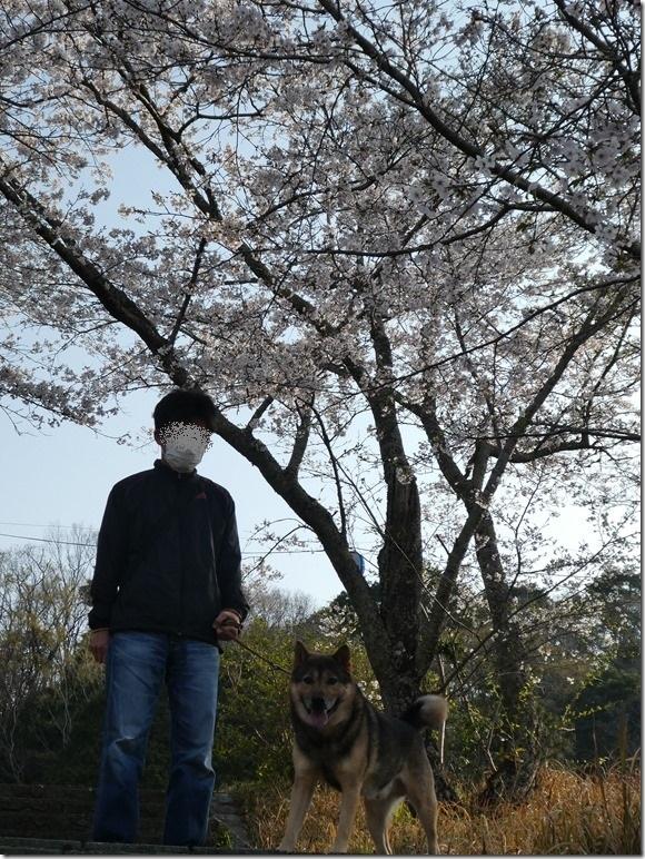 20190407桜散歩01-04