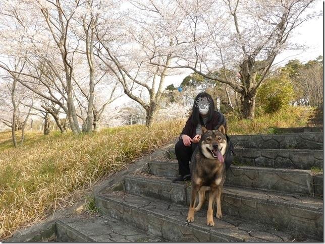 20190407桜散歩01-10