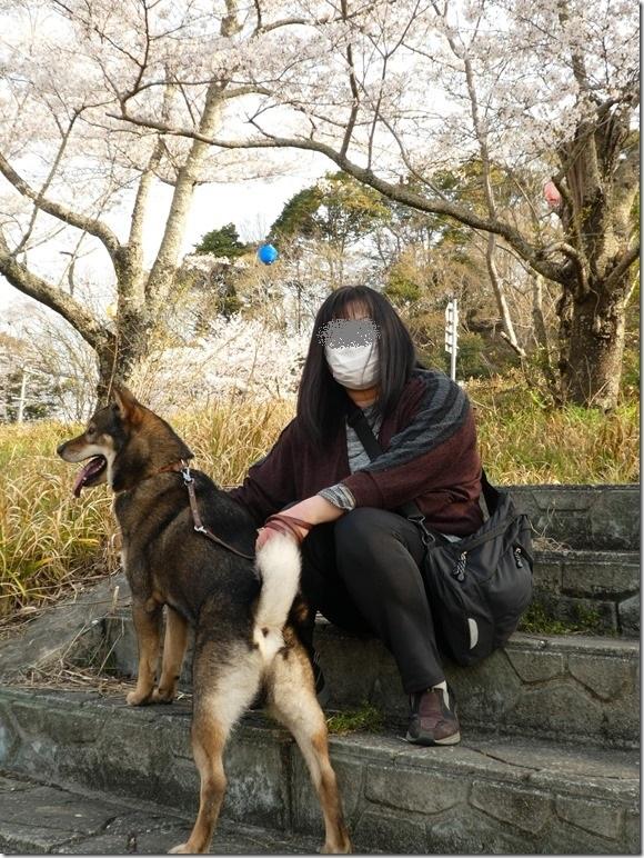 20190407桜散歩01-11
