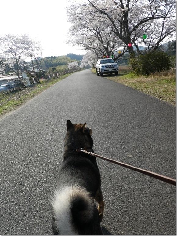 20190407桜散歩01-13