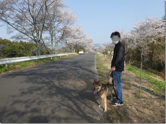 20190407桜散歩01-16