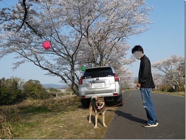 20190407桜散歩01-17