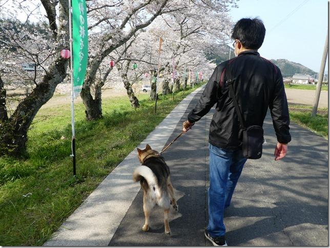 20190407桜散歩02-13