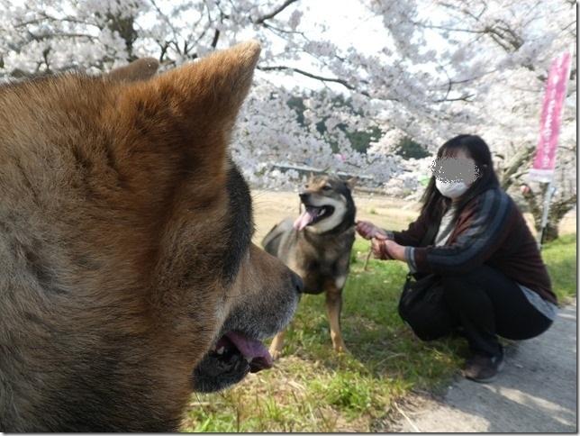 20190407桜散歩02-19
