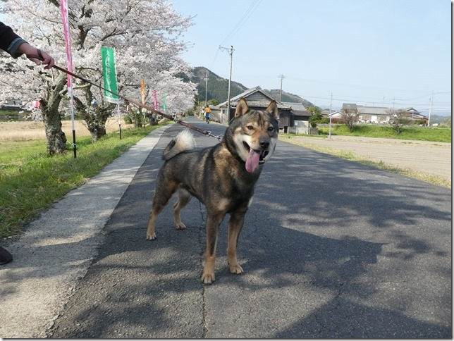 20190407桜散歩02-20