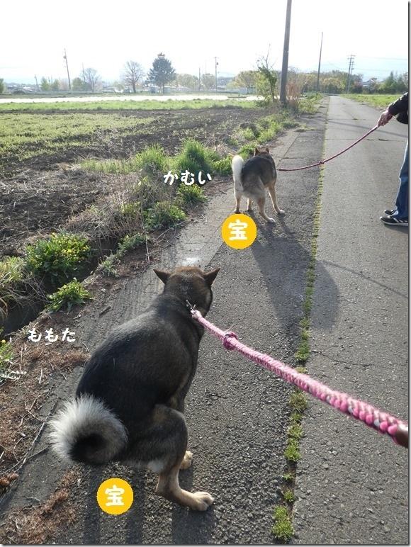 201904平成最後の06-伊那朝散歩-09