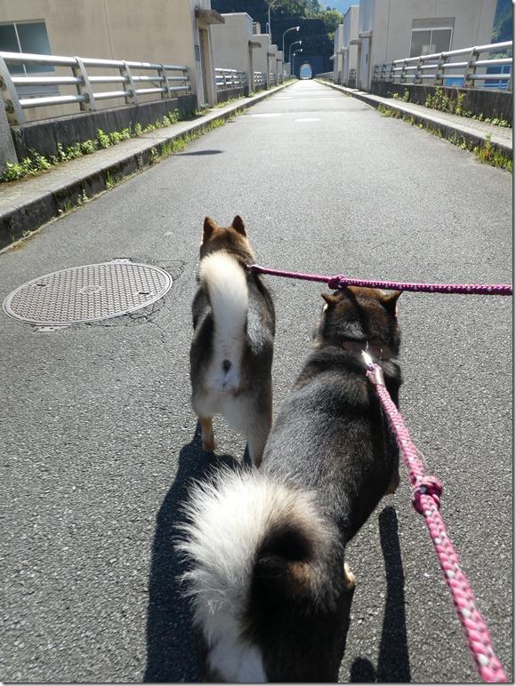 20190504熊野06-04