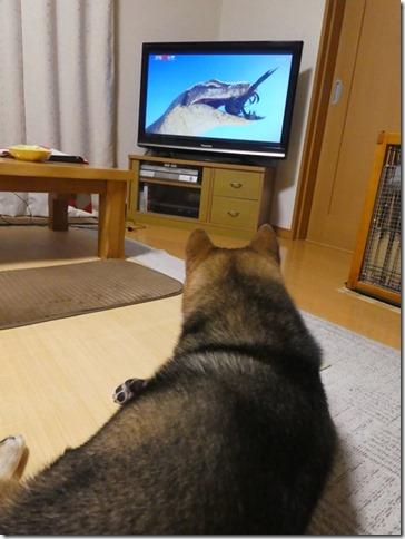 20190724TVっ子カムイ-11