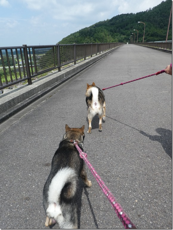 20190825ダム散歩03-05