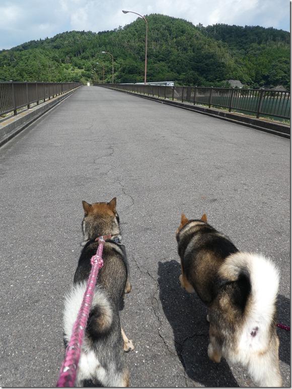 20190825ダム散歩03-09