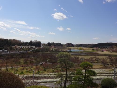 4月の水戸 偕楽園からの眺めです!