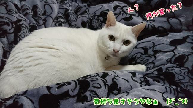 nlTwyC7Gm5yvb251547974917_1547975198.jpg