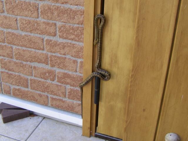 ドアに蛇1021