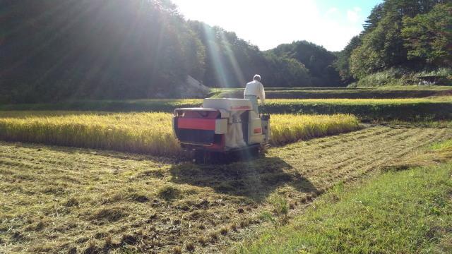 稲刈り1007_1117