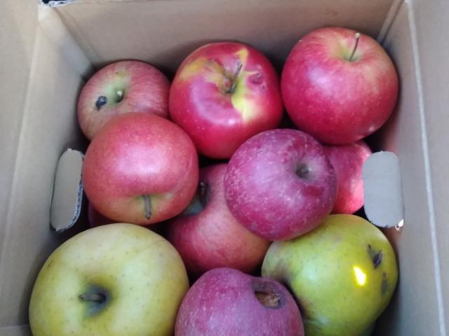 リンゴ1201