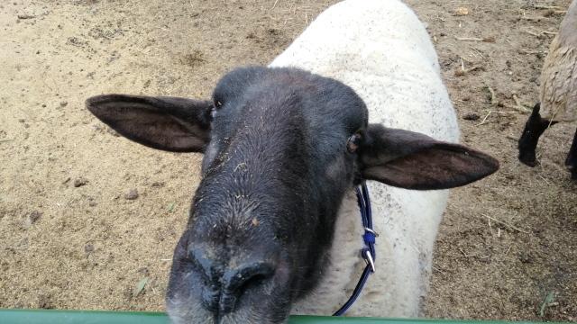 羊0114