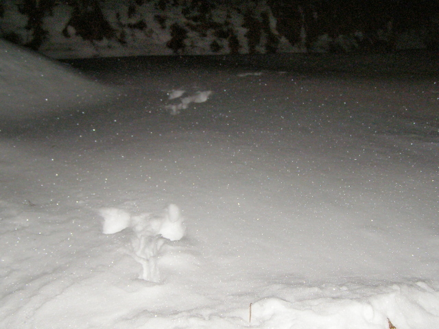 足跡ウサギ20202