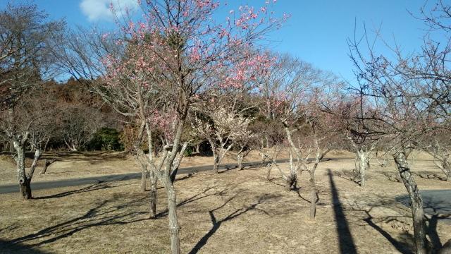 梅園0224