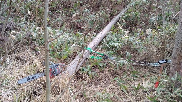 伐木成功0414