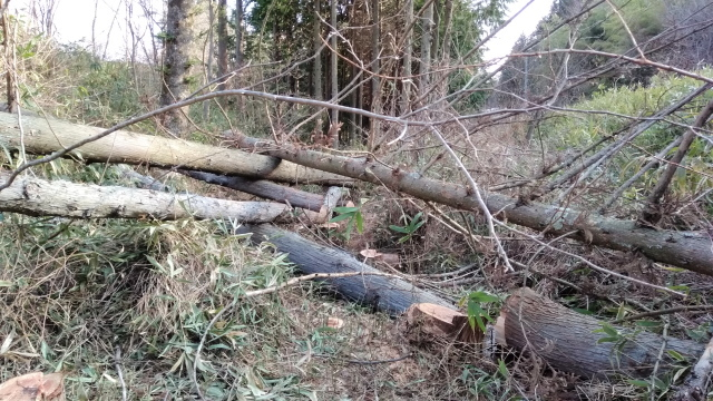 伐木完了0414