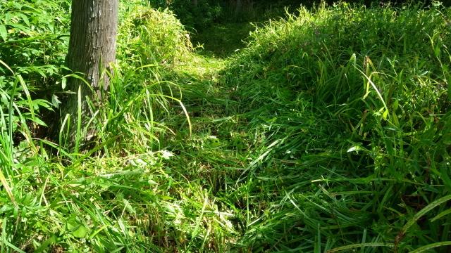 草刈り跡_0908