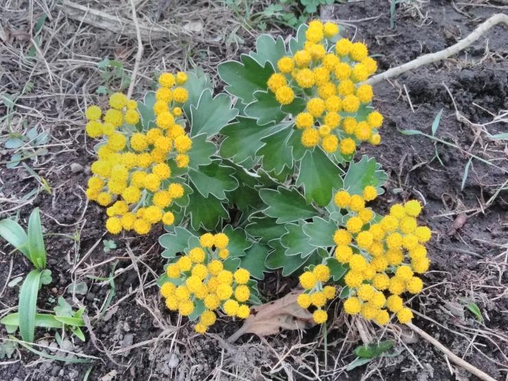 1811花